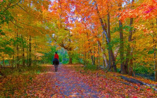 Обои Девушка-жокей в красной куртке и темной фуражке, сидящая на вороном коне, идущим по грунтовой дороге, усыпанной густым слоем осенних листьев, проложенной среди лесной рощи