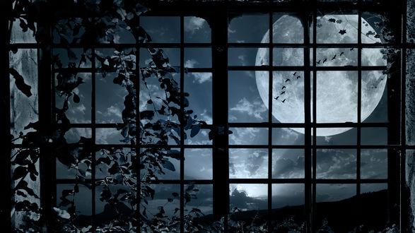 Обои По оконной решетке вьется растение, а за окном светит полная луна и стая птиц летит по ночному небу
