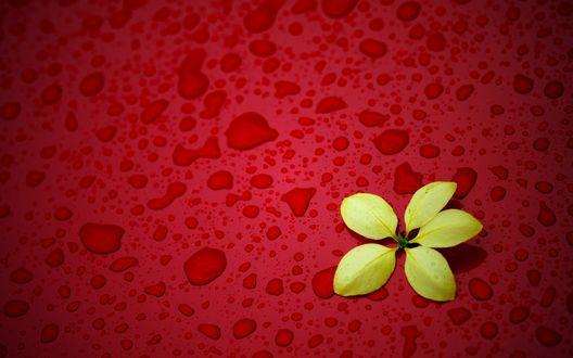 Обои Желтые листья, лежащие на красной поверхности с каплями воды