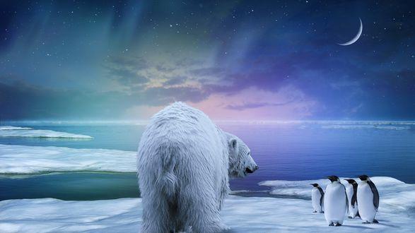Обои Белый медведь, проходящий мимо стайи пингвинов, стоящих на заснеженном, морском побережье на фоне ночного, звездного неба и полумесяца