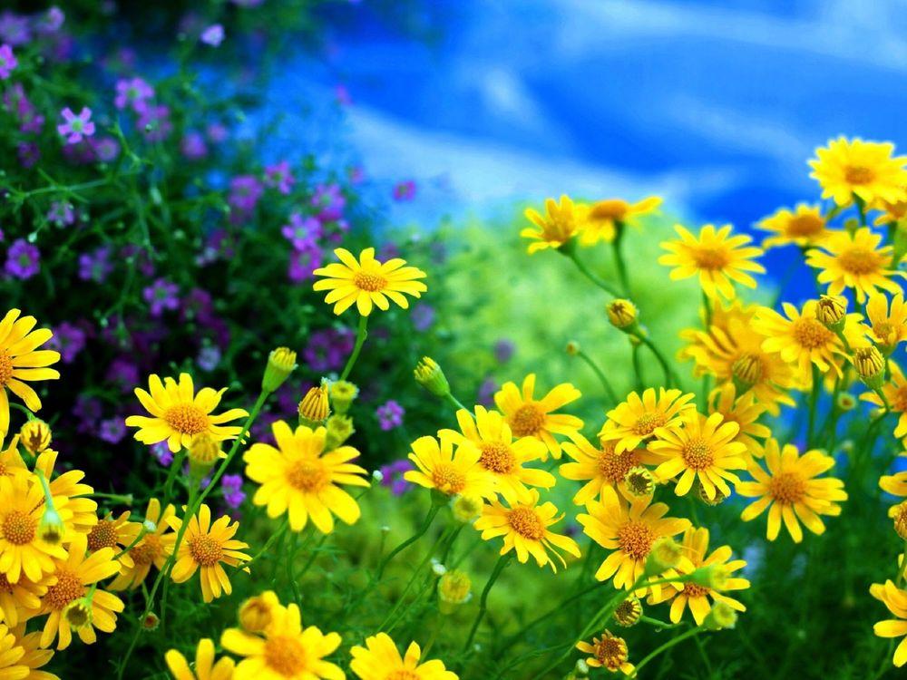 Днем рождения, лето цветы открытки