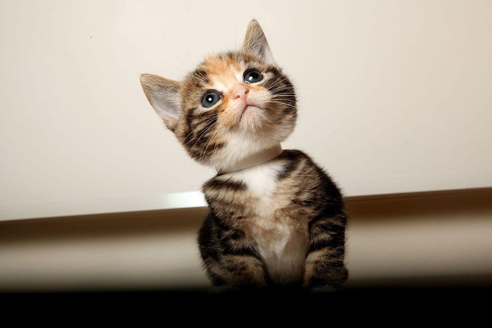 картинки какие котята бывают все незаменимые, профиль