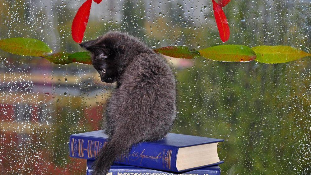 Английски получать, прикольные картинки с надписями про осень и дождь