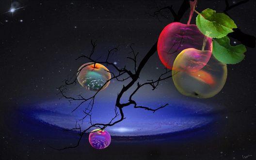 Обои Ветка с волшебными яблоками, в которых изображена природа, фотограф Игорь Зенин
