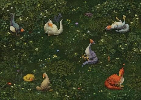 Обои Сказочные птицы в траве