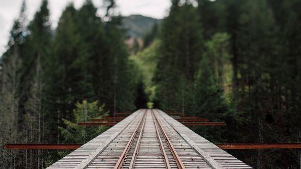 Обои Железнодорожный мост с уходящей в лес железной дорогой