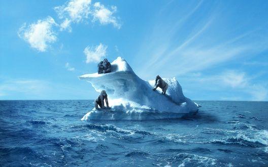 Обои Три гориллы плывут на айсберге в отрытом море под голубым небом