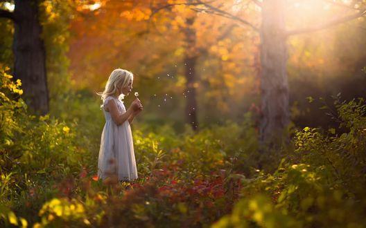 Обои Белокурая девочка в белом платье стоит в освещенном солнцем осеннем лесу и дует на одуванчик
