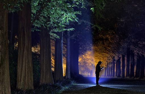 Обои Человек, стоящий на аллее ночного парка с растущими по обочинам деревьями, освещенными электрическим освещением, рассматривает экран планшетного компьютера, автор KIM SUK EUN