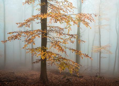Обои Осенний лес, окутанный туманом