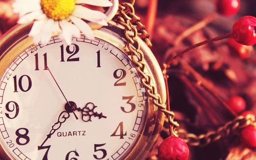 Обои Карманные часы QUARTZ с металлической цепочкой, лежащие в окружении диких яблок и цветком ромашки наверху