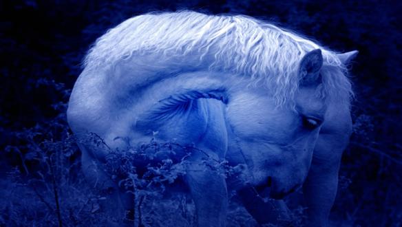 Обои Лошадь ест листики кустов