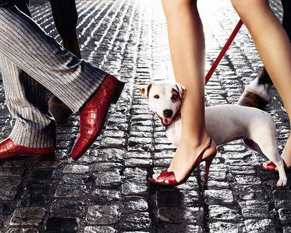 Обои Песик возле женских ног, обутых в босоножки из крокодиловой кожи