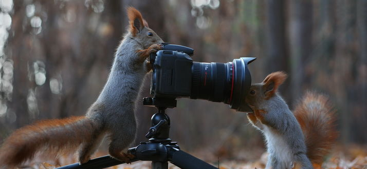 Обои Одна из белок, стоящая задними лапками на штативе, передними облокотилась на фотоаппарат, другая белка засунула свою любопытную мордочку в объектив, автор Вадим Трунов