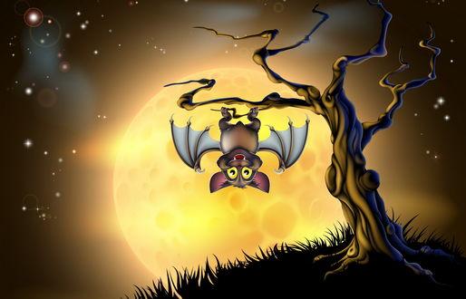 Обои Летучая мышь, висящая на суку дерева на фоне ослепительного, солнечного диска