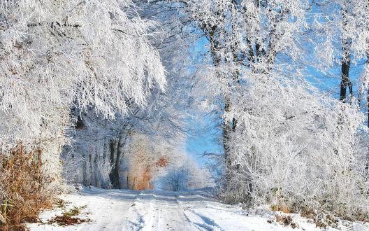 Обои Укатанная, зимняя дорога, проходящая через лесопосадку с деревьями, покрытыми густым слоем инея на фоне голубого, безоблачного неба