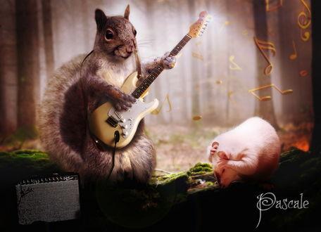 Обои Белка, держа в лапах электрическую гитару, играет музыку рядом с белым поросенком, лежащим на сухом стволе дерева на фоне туманного леса и нотных знаков, парящих в воздухе, автор pvleminx
