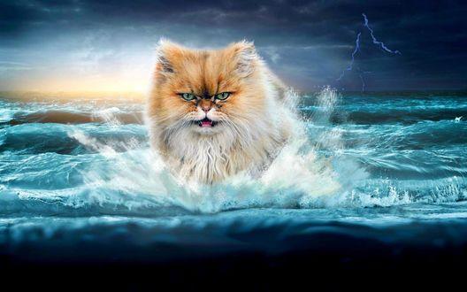 Обои Злобный лохматый кот выходит с волн разбушевавшегося моря