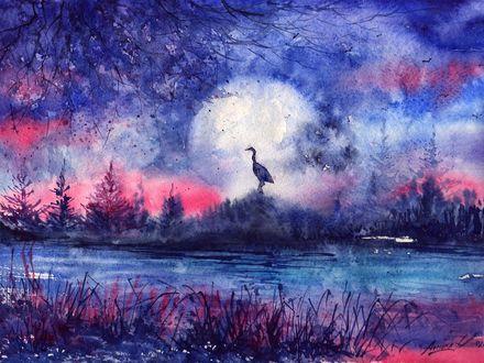 Обои Птица стоит на холме возле реки на фоне заката