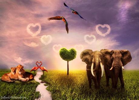 Обои Пара львов, лежащих на зеленой траве возле тропинки, пара розовых фламинго составившие с помощью шей и клювов сердечко, зеленое дерево с лиственной кроной в форме сердечка, пары слонов на траве, пара попугаев ара в воздухе, белые сердечки из облаков на небосклоне, автор SpellpearlArts