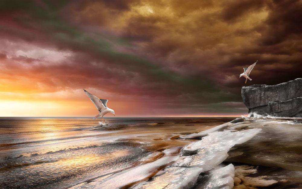 Обои для рабочего стола Морские чайки над заледенелым берегом моря на фоне заката на вечернем небосклоне с разноцветными облаками