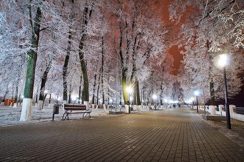 Обои Широкая, мощеная аллея в ночном парке с гуляющими по ней людьми, деревьями, стоящими по обочинам, покрытыми густым слоем инея, ярко горящими фонарями уличного освещения, автор Владислав