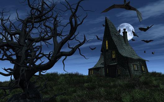 Обои Летучие мыши, летающие над домом с островерхой крышей на фоне ночного неба и полной луны