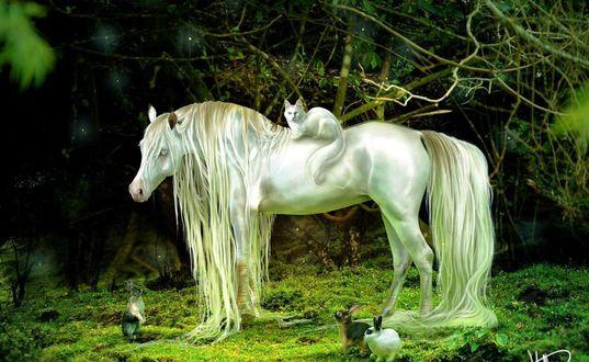 Обои Белая голубоглазая лошадь с длинными белыми гривой и хвостом стоит на зеленой лужайке посреди леса, на ней сидит белая кошка и рядом сидят кролики и заяц