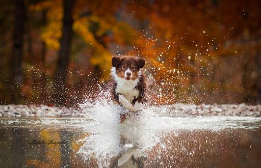 Обои Пес бежит по воде, ву Michelle Weber