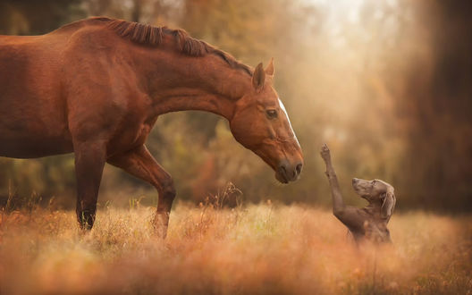 Обои Лошадь склонила голову к поднятой лапе собаки в знак приветствия на осенней поляне