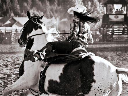 Обои Девушка ковбой в шляпе скачет верхом на пятнистой лошади на родео под дождем