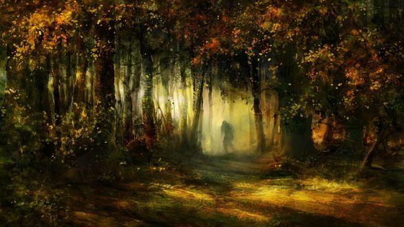 Обои Человеческая тень, стоящая на тропинке в туманной мгле между деревьями в лесной чащобе с осенней листвой