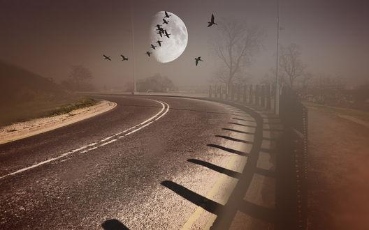 Обои Взошедшая на рассвете планета на пасмурном небосклоне над асфальтовой дорогой, огороженной с одной стороны забором, парящей в небе стаей птиц