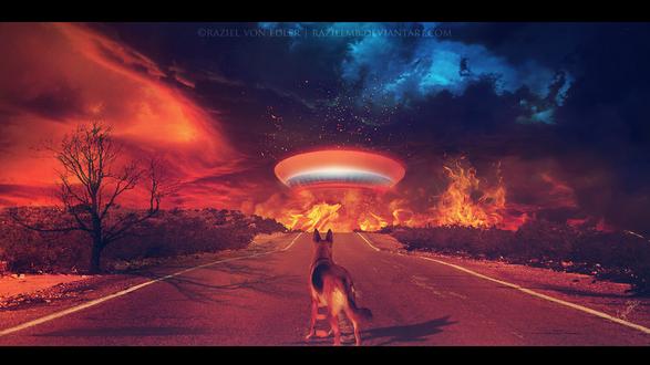 Обои Овчарка, стоящая на асфальтированной дороге наблюдает за посадкой космического объекта, охваченного пламенем, автор Raziel MB