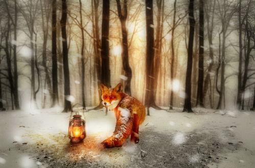 Обои Рыжая лиса, находящаяся на заснеженной лесной опушке под падающим снегом, рядом со стоящей возле нее горящей, керосиновой лампой, автор L-A-Addams-Art