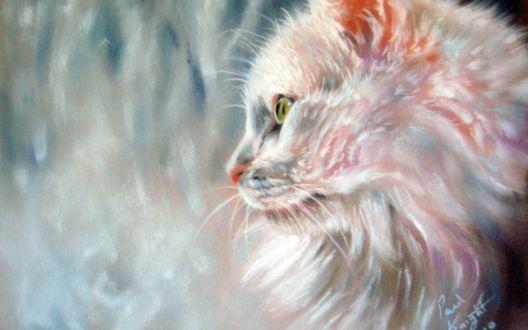 Обои Белая пушистая кошка в профиль