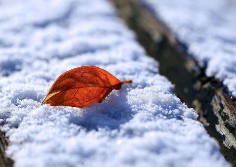 Обои Засохший лист лежит на покрытой снегом поверхности