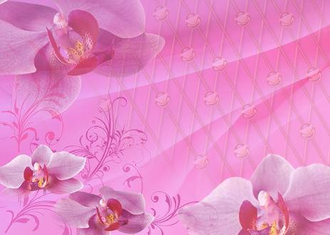 Обои Розовые цветы на абстакции