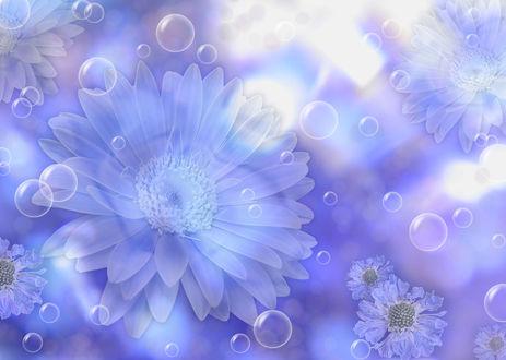 Обои Цветы на синем фоне