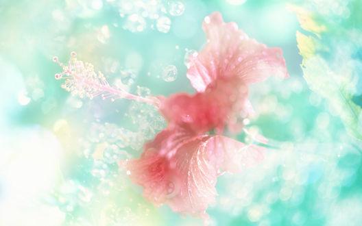 Обои Розовый цветок на зеленом фоне