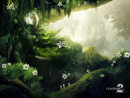 Обои Guild Wars 2 - Сильвари в цветущем лесу