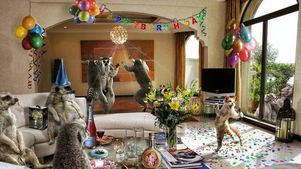 Обои Кот поет караоке на своем дне рождения, который он отмечает с лемурами, сурикатами и гориллой