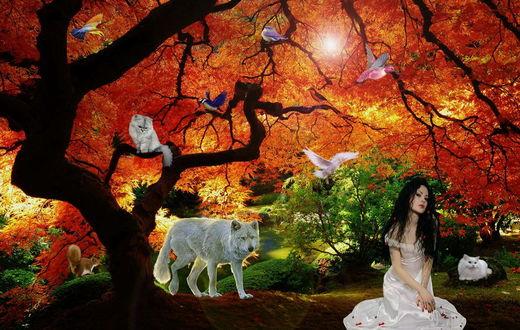 Обои Черноволосая девушка в длинном, белом платье, сидящая невдалеке от дерева с красными листьями, сидящих на ветках и парящих в воздухе птиц, сидящих на ветке дерева и на камне котов, белки на зеленом мху, стоящего возле ствола дерева белого волка, автор RazielMB