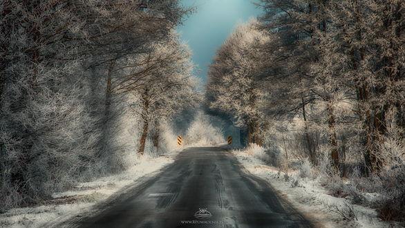 Обои Асфальтовая дорога, проходящая через лесопосадку с деревьями, покрытыми густым слоем инея на фоне вечернего неба, автор Robert Powroznik