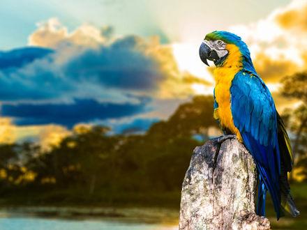 Обои Разноцветный попугай сидит на камне и пристально куда-то смотрит