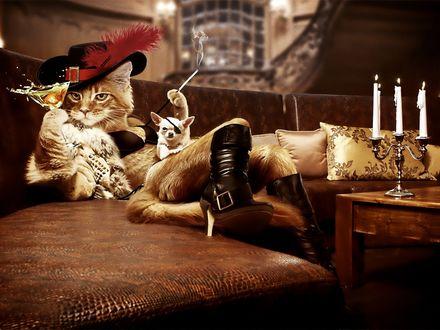 Обои Кот в сапогах с бокалом в лапе и щенок - пират