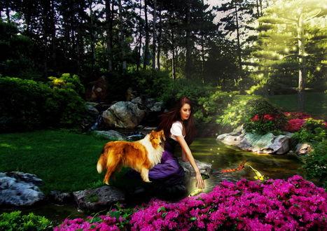 Обои Темноволосая девушка, сидящая на каменистом берегу ручья, играет в воде с декоративными, цветными рыбами, рядом с ней стоит собака колли, на берегу растут красивые, розовые цветы, автор Cellest 84