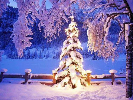 Обои Елка в снегу, освещаемая лампами