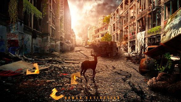 Обои Олень, стоящий на дороге разрушенного после произошедшего апокалипсиса города, разрушенные дома, ржавые, заброшенные автомобили, груды камней от разрушенных домов на фоне ярко светящегося неба, автор bataulai