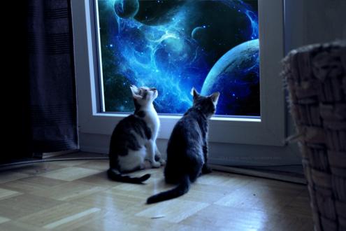 Обои Двое кошек, сидящих на полу, смотрят в окно, за которым космос